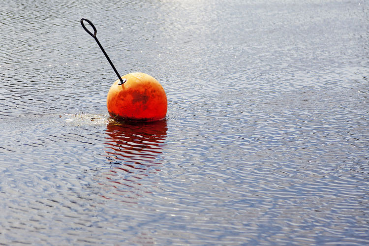 Close-up of wet orange on water