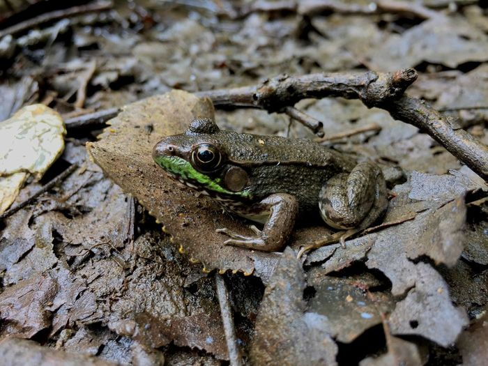 Toad Animals In The Wild Animal Wildlife Animal Themes Animal One Animal Reptile Vertebrate Sunlight Sand Amphibian Nature High Angle View No People Land Day Frog Close-up Zoology Rock
