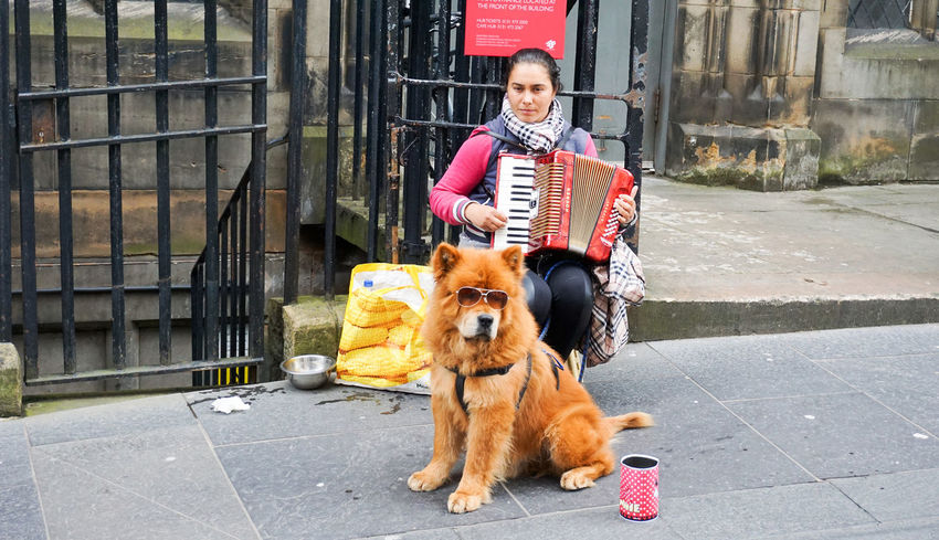 a musician and a dog with sunglasses in Edinburgh, Scotland Dog Fun Looking At Camera Music Musician Pets Smiling Street Street Photography Streetphotography Sunglasses