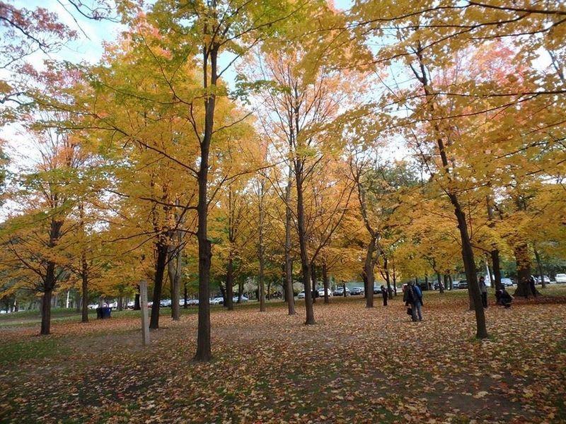 Colourful fall in High park Toronto,Ontario 467914