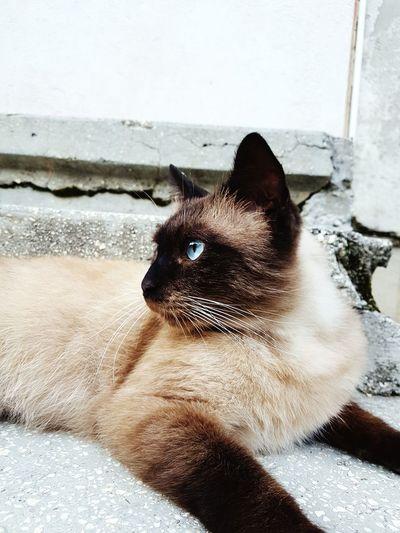Pets Domestic Cat Water Portrait Feline Home Interior Close-up