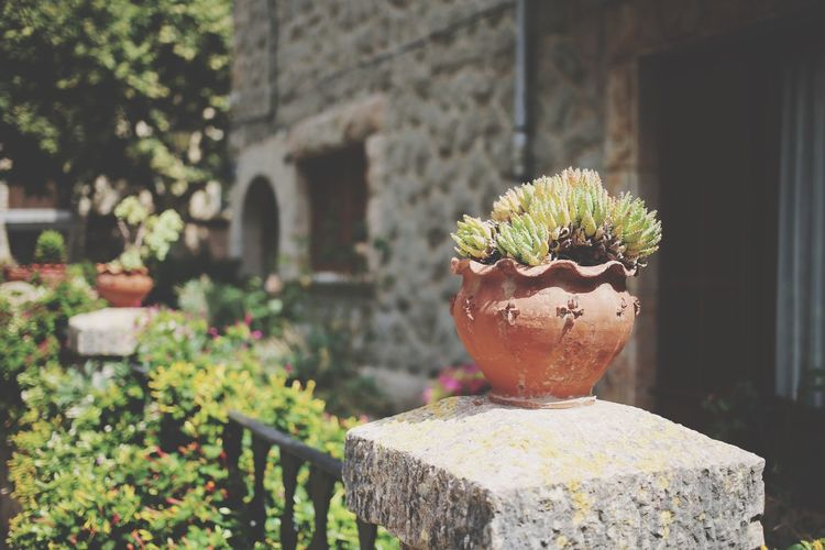 EyeEm Selects Plant Growth Potted Plant Focus On Foreground Architecture Nature