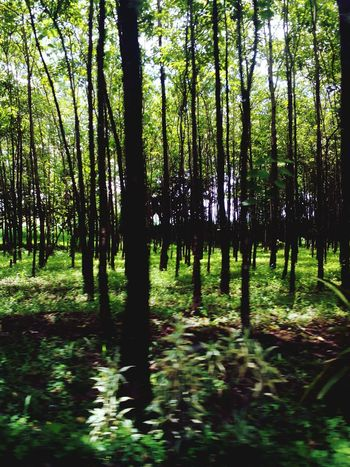 Lost in the woods Trees Nature Photography Philippines Mindanao Love Phaicaptures VSCO VSCOPH