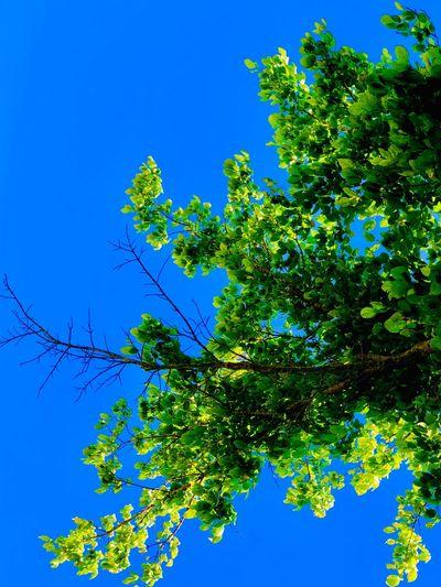Sky Plant Blue