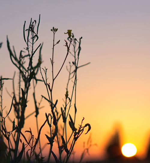 Bird Tree Sunset Bare Tree Flower Silhouette Branch Desert Rural Scene Sky Romantic Sky Dramatic Sky Moody Sky