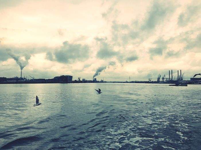 Water Sky Cloud - Sky Animals In The Wild Nature Bird Swimming Outdoors Waterfront Reflection Beauty In Nature Day Silhouette Sea Tranquility Scenics Animal Themes No People Architecture Amsterdam Nature Ship Ferry Ndsm My City