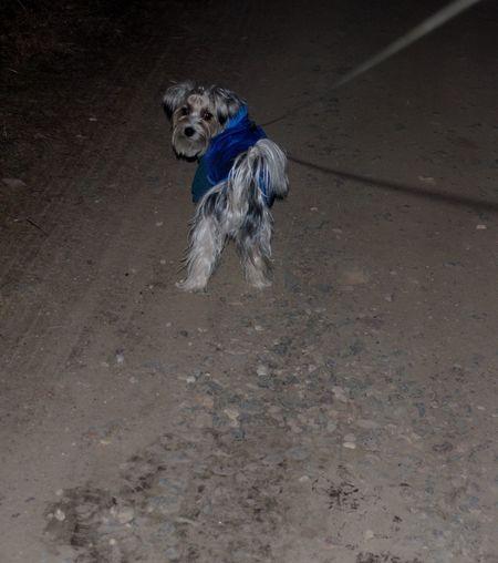 dog posing Dog