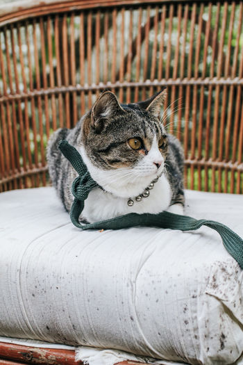 Portrait of a cat sitting on metal