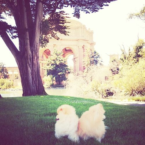 A Cuteeee♥♡♥ puppies Walking Around outside Happy Time