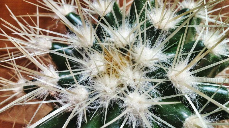 EyeEm Cactus I Love Cactus Cactuslover Photo Piquante... Beautiful Nature G3