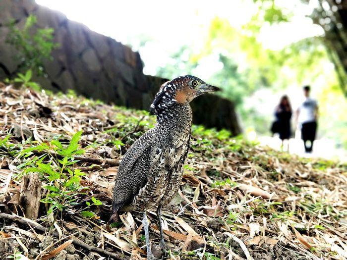 可是夜鷺??One Animal Animal Wildlife Animal Themes Day Animals In The Wild Bird Outdoors