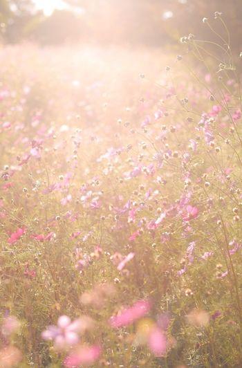 あの時ともにいたけどもういない。 Snapshots Of Life Living Life Peace Love Japan Flowers