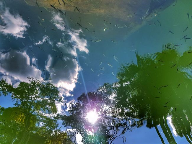 Fish Nature Tree Outdoors Beauty In Nature No People Forest Blue Day Sky Water Freshness Getty Images Premium Collection Bestsellers Beauty In Nature Reflection Perspectives On Nature Rethink Things AI Now