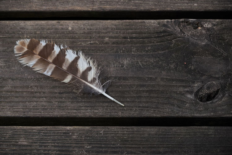 Close-up of feather on wood