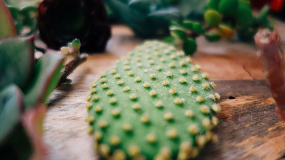 Gardening Garden Flower Plant Succulents Cactus Table Selective Focus Indoors  Close-up Green Color No People Day Nature