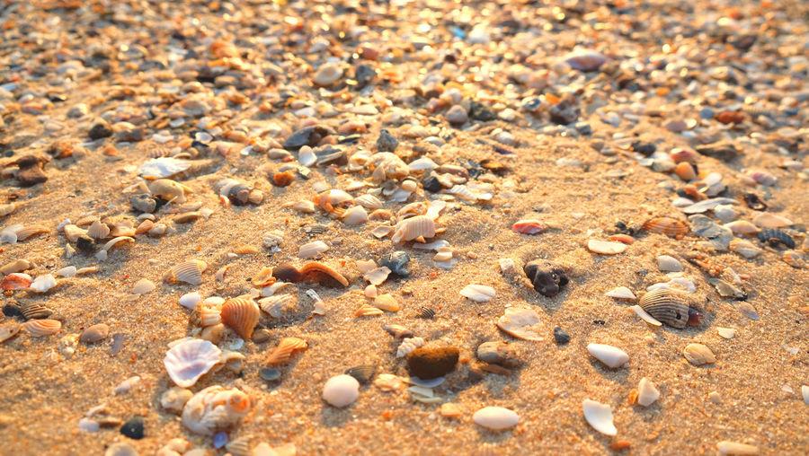Full frame shot of shells on sand