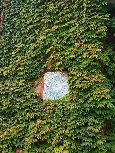 Green Color Day Growth No People Leaf Outdoors Full Frame Nature Close-up Grass Freshness Climbing Plant Green Wall Hedera On Wall Canadian Vine Wall Decoration