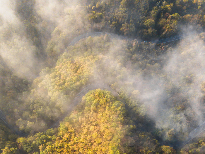 aerial view over some roads in Germany Tree Scenics - Nature Plant Beauty In Nature Nature No People Environment Day Forest Tranquil Scene Tranquility Fog High Angle View Aerial View Cloud - Sky Land Landscape Non-urban Scene Growth Outdoors Change Plant Green Autumn Road