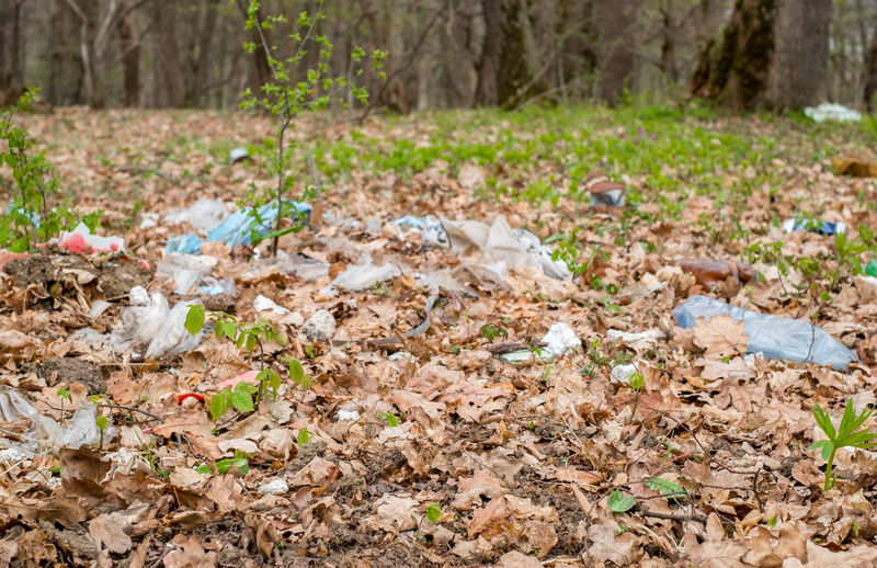garbage in the forest among the spring shrubs Garbage In The Forest Among The Spring Shrubs Pollution Pollution In My World Land Plant Plant Part Tree Nature Leaf Day Field No People Dry Forest Environment Falling Outdoors Garbage Leaves Autumn Growth Surface Level Environmental Issues Change