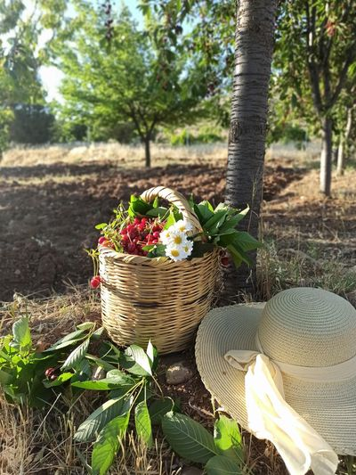 Potted plants in basket on field