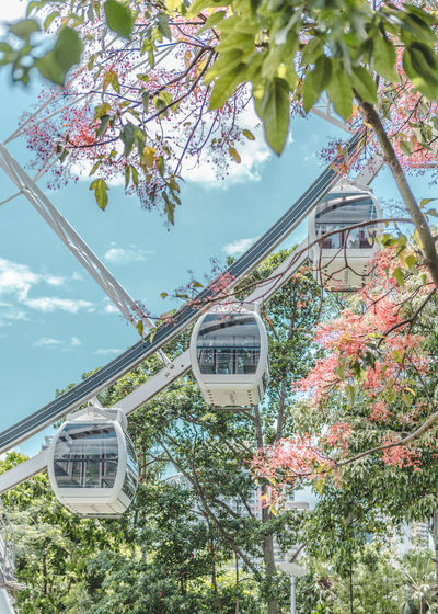 Tree Plant Nature Sign Text Communication Day Branch Growth Sky Low Angle View Built Structure No People Flower Architecture Outdoors Flowering Plant Road Sign Building Exterior Cherry Blossom Cherry Tree Wallpaper Tree And Sky Ferris Wheel Ferriswheel