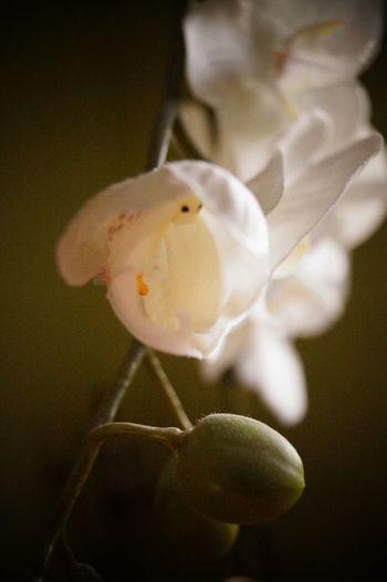 Whiteness White Flowers EyeEm Nature Lover Prettythings Wonderful