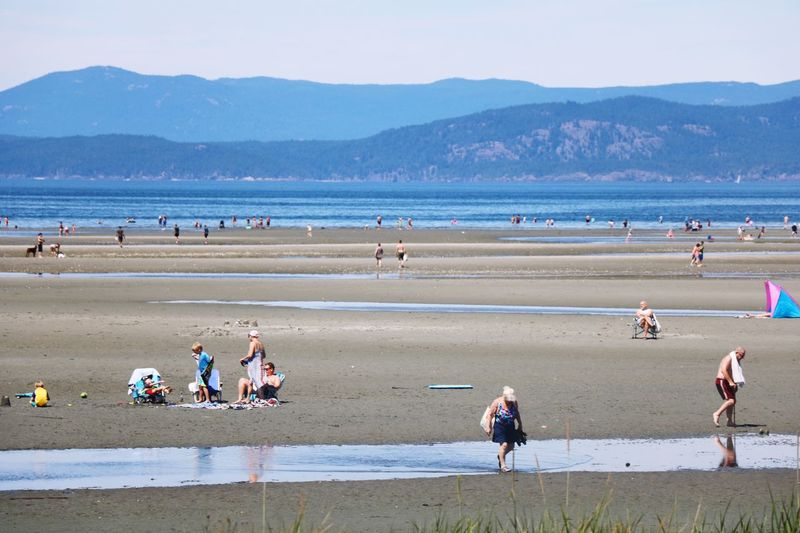 Summer Beach Water Sea Nature Mountain Large Group Of People Outdoors Beauty In Nature Scenics Sand Real People Day Vacations Sky Flamingo Men Bird Mammal People Adult