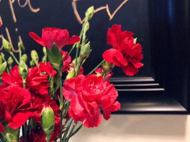 Flowering Plant Flower Plant Vulnerability  Fragility Freshness Beauty In Nature