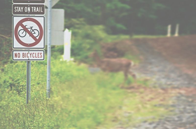 Nikonphotography Faded Wildlife Deer Deer Crossing Communication Sign Text Information Western Script Focus On Foreground No People Road Sign Nature