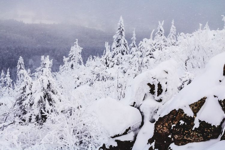 Snow Jested Cold Temperature Winter White Color Beauty In Nature Frozen Outdoors Throwback No People Trip