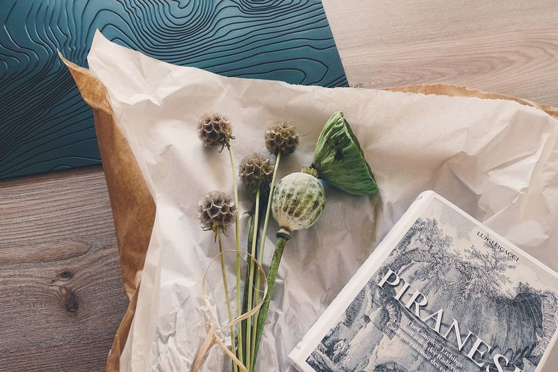 EyeEm Selects Indoors  Paper Leaf Herb Close-up Book Classic Plant Flower Lotus High Angle View Lifestyles Life Modern Vintage Table Still Life Summer Naturelovers Nature Summertime Plants The Still Life Photographer - 2018 EyeEm Awards