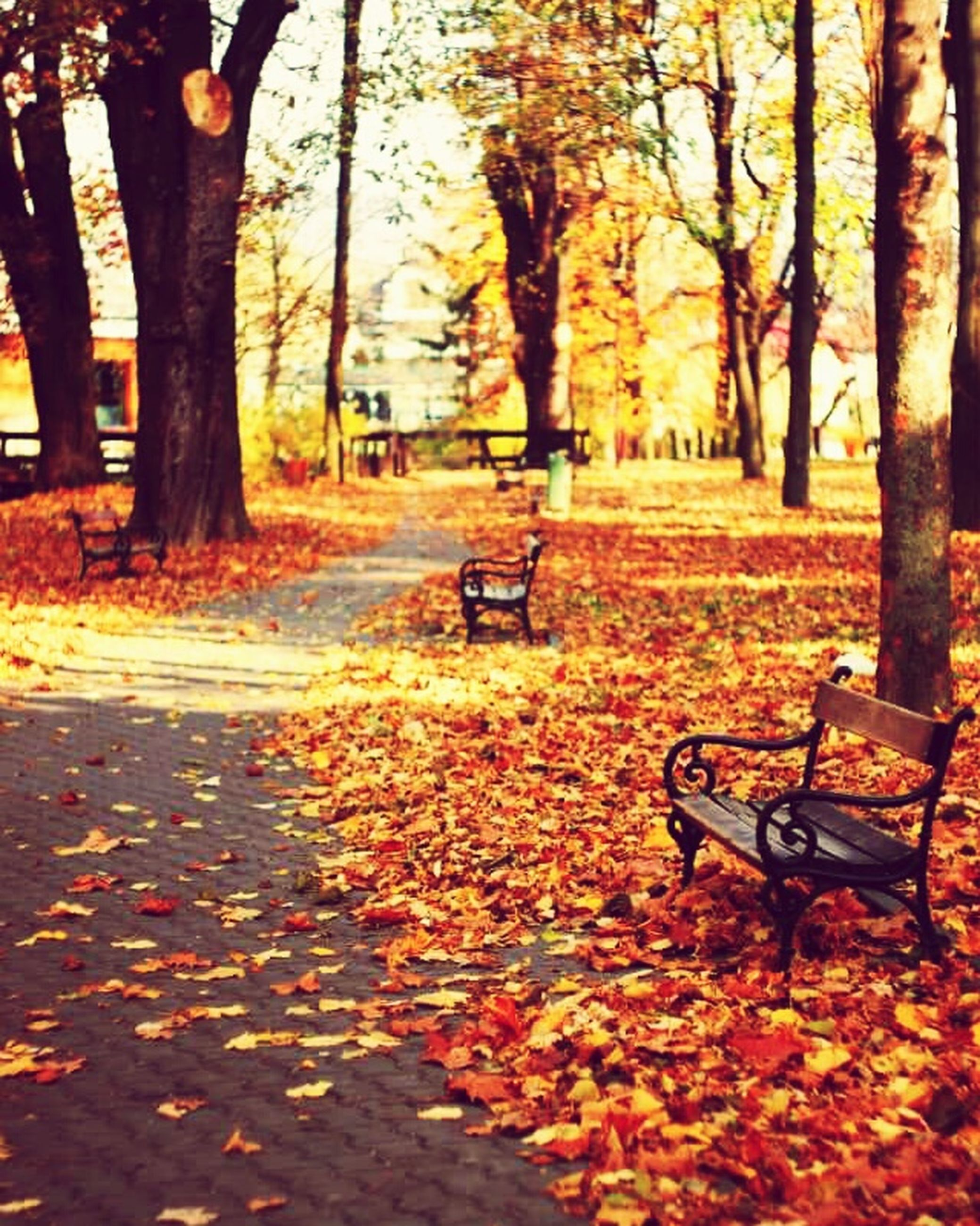 tree, autumn, change, leaf, season, tree trunk, the way forward, fallen, transportation, bench, tranquility, orange color, nature, footpath, leaves, empty, park - man made space, sunlight, absence, park bench
