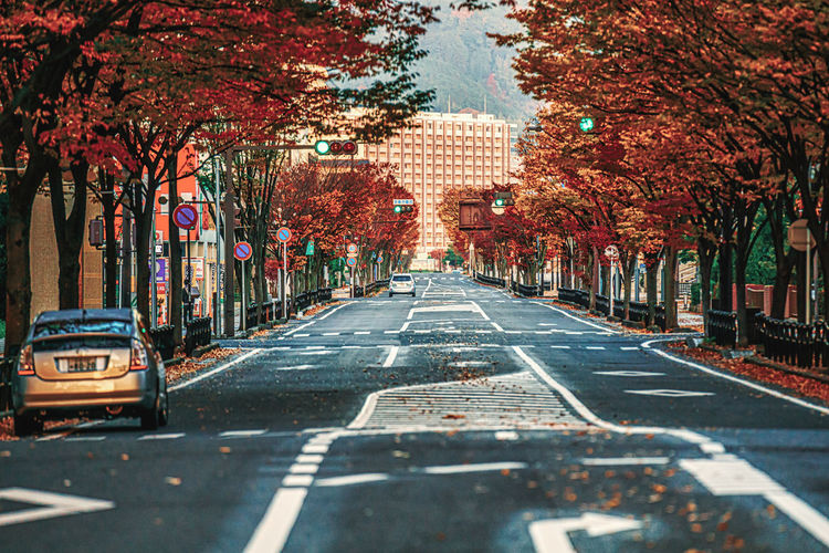 Road amidst trees in city during autumn