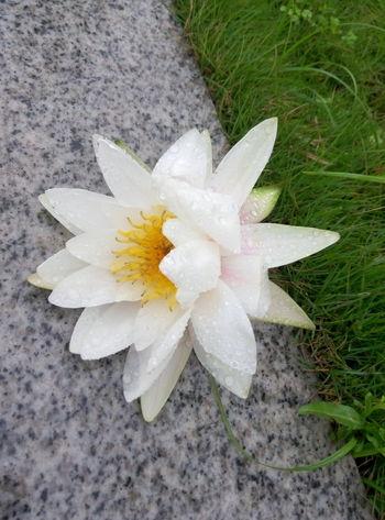 After The Rain Flower White Fresh Air