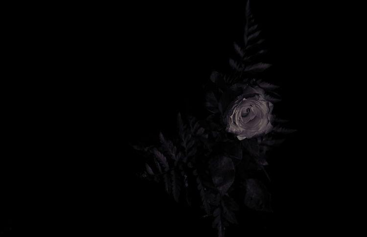 Lieblingsteil Love Perspective Black Black Background Blackandwhite Close-up Effect Flower Flower Head Foto Fotografia Fotography Fresh Macro Nature No People Photo Photographer Photography Photooftheday Rose - Flower Rosé Studio Shot Style