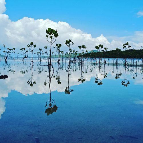 Mangroves on
