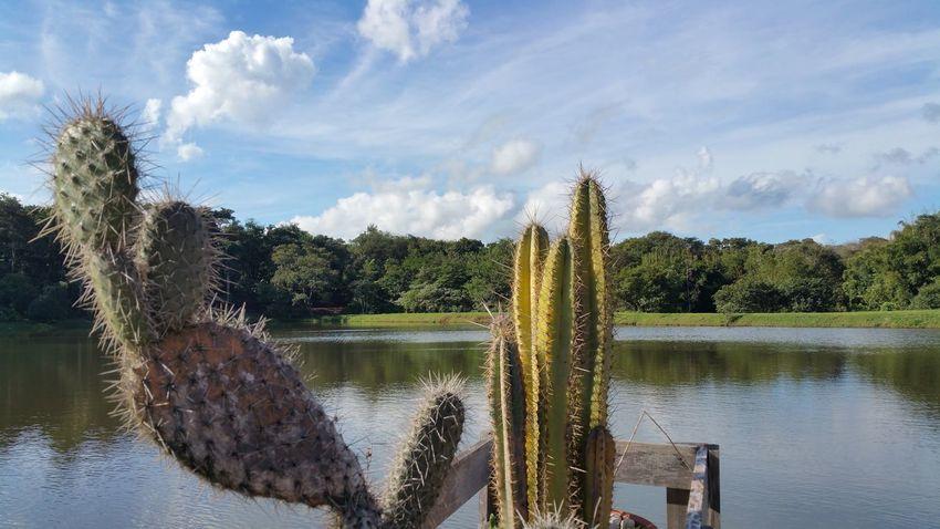 Batatais, SP, Brasil First Eyeem Photo Nature Cactus Lake Lake View Brasil Beauty In Nature Beautiful