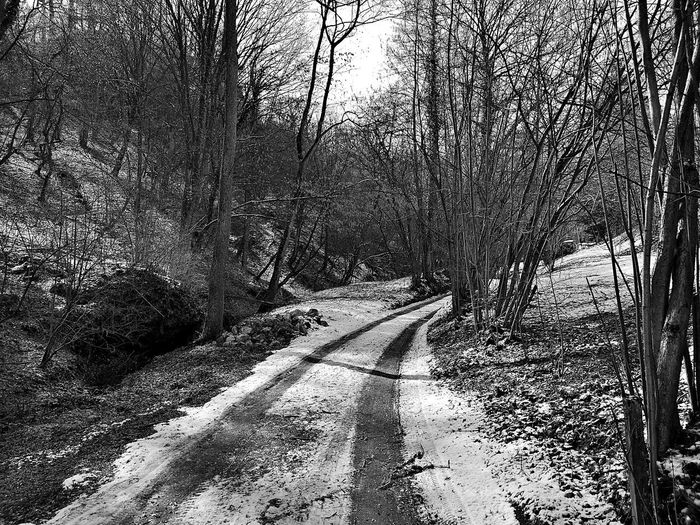 Dirt road along bare trees in the forest