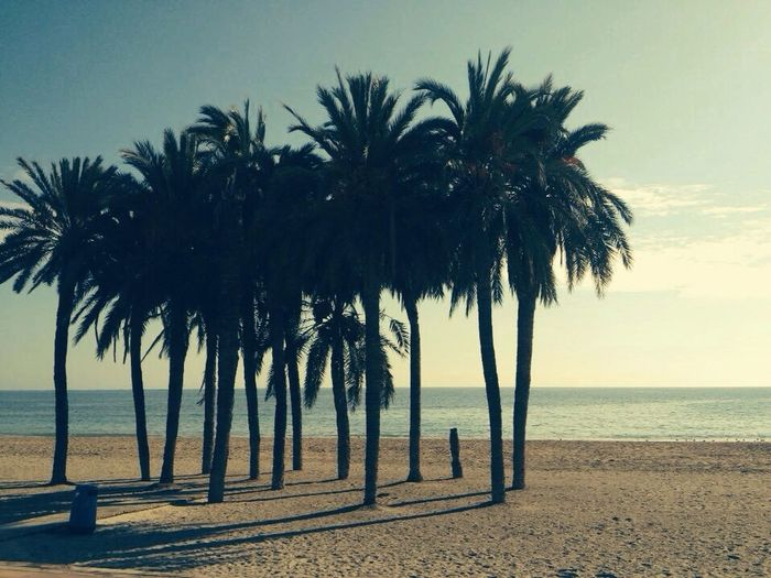 Enjoying The Sun Sea Palmtrees España
