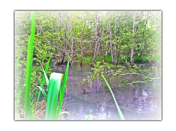 A beaver made this lagoon a ways up from my place, I have tried to spot this beaver and get a phot op yet it is a secretive and elusive one.. Nature Water_collection Eye4photography  EyeEm Nature Lover