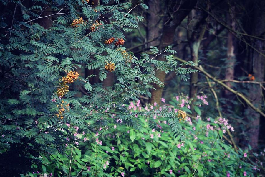 Forest Berries Forest Flowers Trees British Summertime Green Check This Out Taking Photos Hanging Out Relaxing Enjoying Life
