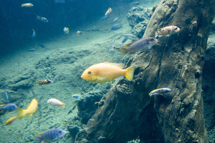 Animal Themes Animal Animal Wildlife Group Of Animals Animals In The Wild Fish Swimming Water Vertebrate Underwater Sea Sea Life Large Group Of Animals Marine No People Nature UnderSea Rock - Object Rock School Of Fish
