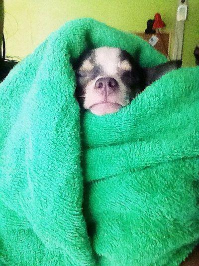 Detest bathing but still loves me anyway.