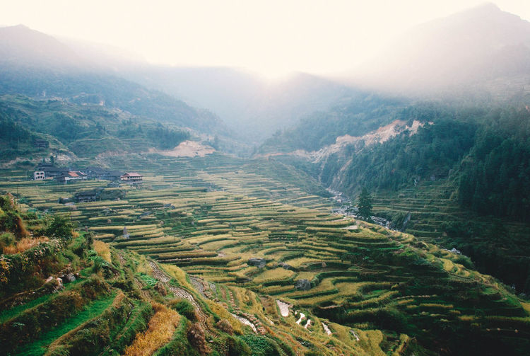 Agriculture Beauty In Nature Crop  Cultivated Land Day Farm Field Fog Growth High Angle View Landscape Mountain Mountain Range Nature No People Outdoors Plant Rice - Cereal Plant Rice Paddy Rural Scene Scenics Terraced Field Tranquil Scene Tranquility Tree