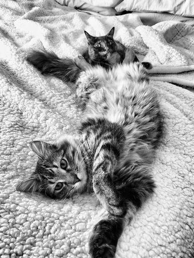 Portrait of cat lying on tiled floor