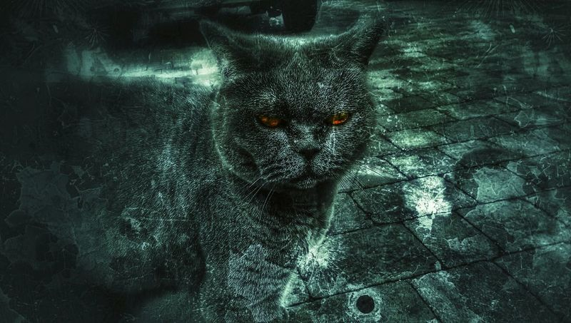 The soul is in the shadow.... Grunge Grunge It Up Witches Cat Witching Hour Evileyethank you lots for a little idea... 🙏 and I'm still allergic to cats... and a little afraid.