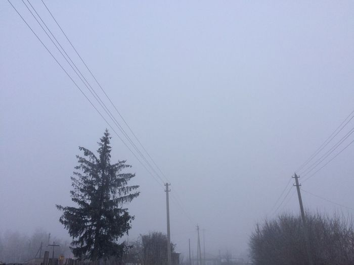 Tree Power Line  Foggy Morning Frosty Mornings Winter/spring Outdoors Clear Sky Nature No People Tranquil Scene Cold