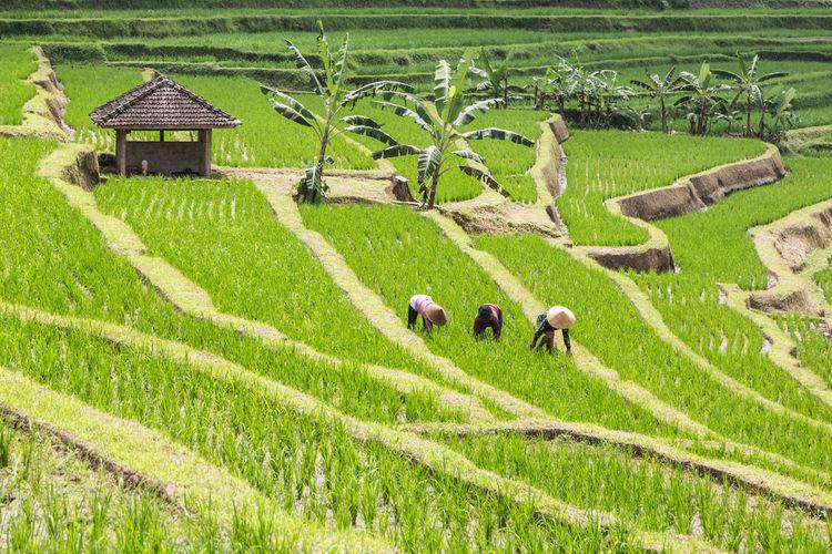 Scenic view of green farm