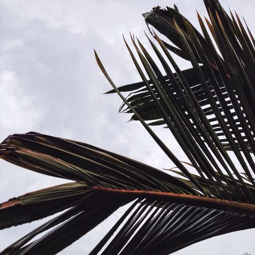 Low angle view of palm leaves against cloudy sky