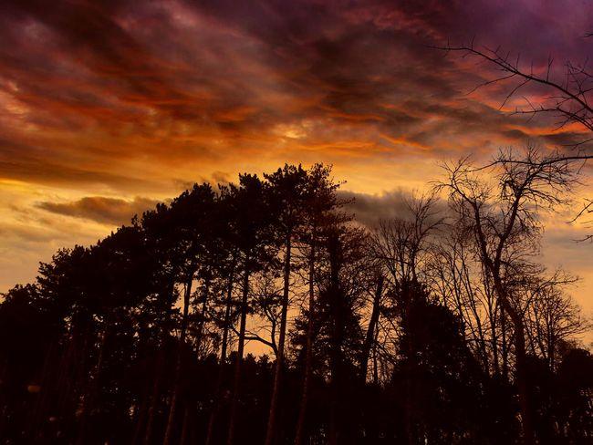 Butiful Sky Sky Clouds And Sky Burning Sky Photography Trees Sunday
